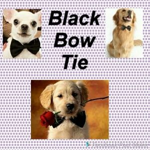 Black Tie Event For Fur Baby